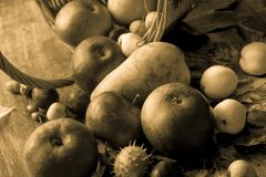 Fall fruits on table still life. Fall  fruits on table  still life closeup Stock Photography