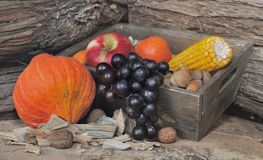Fall fruits and vegetables Royalty Free Stock Photos