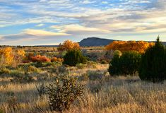 Fall in Galisteo New Mexico. Colorful leaves in the fall in Galisteo New Mexico USA royalty free stock images