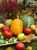Fall in the garden. Pumpkins Stock Photography