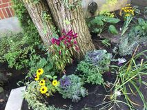 Fall garden with annuals around tree Stock Photos