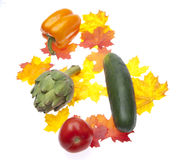 Fall Garden Bounty Royalty Free Stock Image