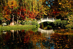 Fall Garden foliage and color. A Japanese Garden full of fall foliage and colors Royalty Free Stock Photography