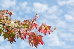 Fall garden Stock Photography