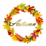 Fall garland. For your design Royalty Free Stock Photo