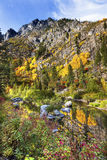Fall-gelber rote Farbreflexion Wenatchee-Fluss Washington stockbilder