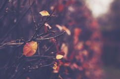 Fall in gloomy abandoned park with naked bushes Royalty Free Stock Photography