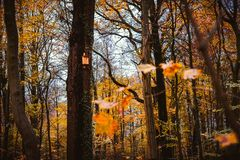 Fall, golden autumn forest with wooden birdhouse on a tree. Autumn concept Royalty Free Stock Photos