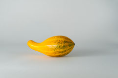 Fall Gourd Stock Images