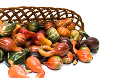 Fall Gourds. Fall craft gourds pouring out of a basket. White background stock photo