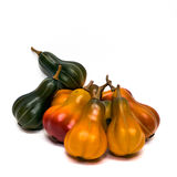 Fall Gourds. Autumn craft gourds against a white background stock photo