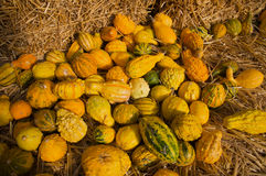 Fall gourds Royalty Free Stock Image