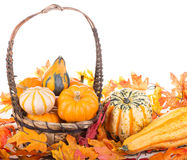 Fall Gourds in a Basket Royalty Free Stock Photography
