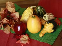 Fall gourds with leaves Royalty Free Stock Images