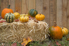 Fall Gourds and Pumpkins Stock Images