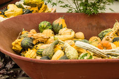 Fall gourds in a wheel barrow Stock Photography