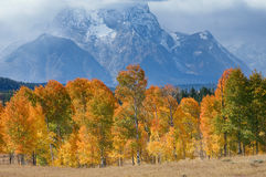 Fall at Grand Tetons Stock Photo