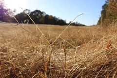 Fall Grass Stock Images