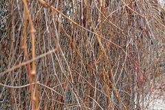 Fall Grass fence with trunks, autumn - winter background. For web site or mobile devices Royalty Free Stock Image