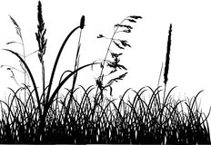 Fall grass silhouettes isolated on white Stock Photography