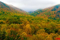 Fall in great smoky mountain Stock Images