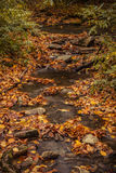 Fall in Great Smoky Mountains National Park Royalty Free Stock Images