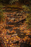 Fall in Great Smoky Mountains National Park Stock Images