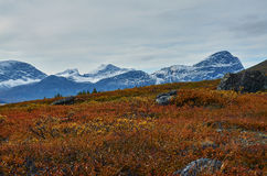 Fall in Greenland. The colors off fall in Greenland Stock Image