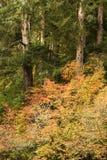 Fall, großer Nebenfluss, nahe Knappa, Oregon Stockbild