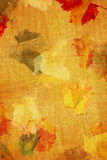 Fall Grunge color texture Stock Photo