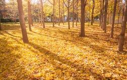 fall Hösten landskap arkivfoto