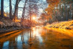 fall Höstgryning Klar flod i skog royaltyfria bilder