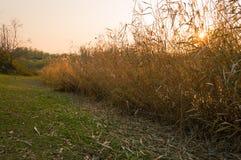 fall Höstlandskap på solnedgången arkivfoton