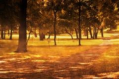 Fall höstpark Royaltyfri Fotografi