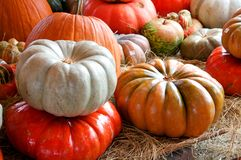 Fall or Halloween Pumpkins. A group of fall or Halloween pumpkins in the horizontal format Stock Photos