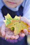 Fall in hands. Fall in the little hands royalty free stock images