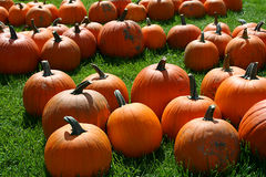 Fall Harvest. Group of pumpkins in grass Stock Photos