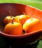 Fall Harvest. Pumpkins and gourds in a wheelbarrow stock images