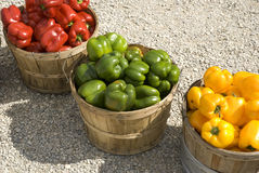 Fall harvest. Of colourful peppers in wooden bushel baskets Stock Photography