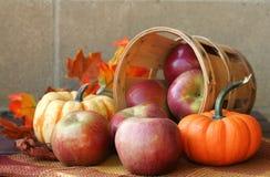 Free Fall Harvest Royalty Free Stock Photos - 3322278