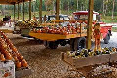 Fall Harvest. A shot of trucks loaded with the fall harvest Royalty Free Stock Images