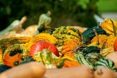 Free Fall Harvest Royalty Free Stock Photos - 41943808