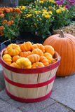 Fall Harvest Royalty Free Stock Photography