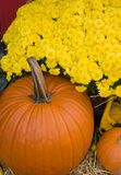 Fall Harvest Stock Image