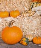Fall Harvest Arrangement Stock Images