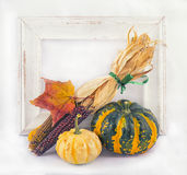 Fall harvest background with pumpkins Stock Photos