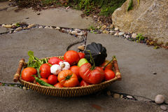 Fall harvest basket with tomatoe Stock Images