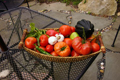 Fall harvest basket with tomatoe Stock Photo