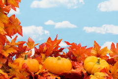 Fall Harvest Border Stock Image