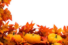 Fall Harvest Border. Fall leaves with pumpkin on white background, fall harvest Stock Photography